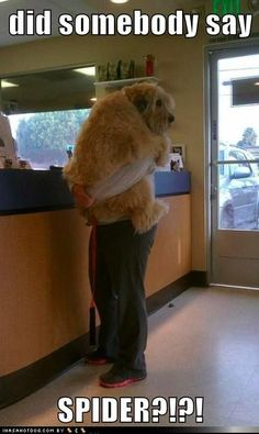 funny dog pictures - did somebody say  SPIDER?!?!