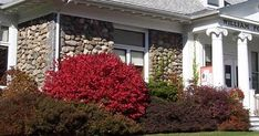 Burning Bush perfect for homeowners looking for a scintillating burst of bright crimson in their garden - Euonymus alatus a perfect choice! Burning Bush Plant, Euonymus Alatus, Plant Care, Garden Art, Yard, Exterior, Landscape, Plants, Hobbies