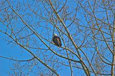 Eastvan Eagle