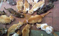 14 koček jíci granule