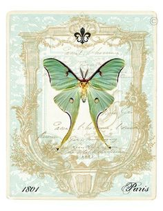 luna moth art | LUNA MOTH Vintage Style ART PRINT 8 x 10 by TheDecoratedHouse