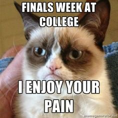 Grumpy Cat 1 - Finals Week at college I enjoy your pain