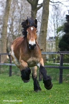 Belgian draft horse. It's colors are perfect. So adorable
