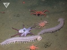 """montereybayaquarium: """"  Party on the seafloor! Our intrepid colleagues at the…"""