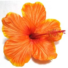 Realistic Orange Tropical Hair Flower Clip (167.230 IDR) ❤ liked on Polyvore featuring accessories, hair accessories, flowers, backgrounds, orange hair accessories and flower hair accessories