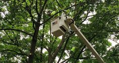 Kansas City Tree Trimming - A&E Tree Service explains this importance of tree trimming for Kansas City businesses. Importance Of Trees, Cheque, Think Big, Screen Replacement, Lund, Conditioning, Kansas City, Erotic, Bakery