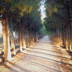 take a walk. Parque Norte