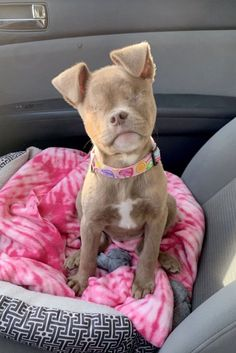 i love dogs A dog who lost her eyes due to neglect has become an Insta-celebrity Cute Baby Dogs, Cute Little Puppies, Cute Dogs And Puppies, Cute Little Animals, Cute Funny Animals, I Love Dogs, Funny Dogs, Doggies, Small Puppies