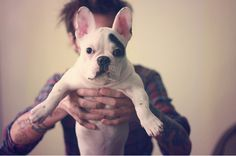 guy with tattoos and french bulldog. perfect.