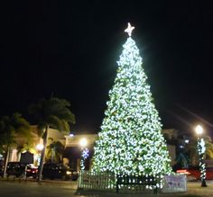 Punta Gorda Florida Daily Photo: Punta Gorda Downtown Christmas Tree