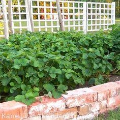 Kanelia ja kardemummaa: Kasvihuoneemme synty Roman, Outdoor Structures, Garden, Plants, Garten, Flora, Plant, Lawn And Garden, Outdoor
