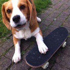 """I am a skate dog"