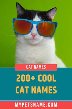 Trying choose from cool cat names for your new kitty? This article will give you every possible name, with over 200 perfect names to fit whatever personali Cool Pet Names, Cute Cat Names, Cat Breeds, Cool Cats, Fur Babies, Kitty, Facts, Cool Stuff, Check