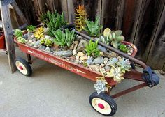 Vintage Red Flyer Wagon - Planter With Succulent Plants