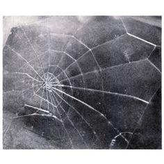 Vija Celmins, Spider Web