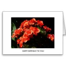 Gorgeous Begonia Flowers Birthday Card for someone special.  Beautiful floral image.