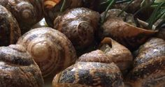 χοχλιοί μπουμπουριστοί ρουκακιανοί - Pandespani.com Greek Beauty, Greek Recipes, Fish And Seafood, Baked Potato, Appetizers, Cooking Recipes, Herbs, Snails, Baking