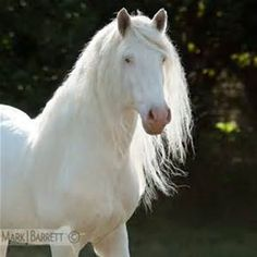 Stock Photos Horses, Equine Photography and Video by Mark J. Most Beautiful Animals, Beautiful Horses, Beautiful Creatures, All The Pretty Horses, Paint Horse, All About Horses, Majestic Horse, Horses And Dogs, Horse World