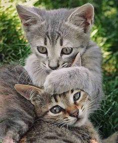 What a pair of cuties… #cats #kittens #cute #cutecats