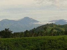 Sugarcane field with Mt. Apo in thw background. New Sibonga, Kiblawan, Davao del Sur.