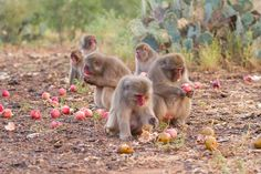 It's all peachy at the Born Free USA Primate Sanctuary!  http://on.fb.me/1y6Tfjo