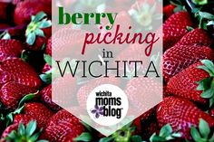Berry picking season is so close we can almost taste it! Here are the best spots for berry picking in Wichita.