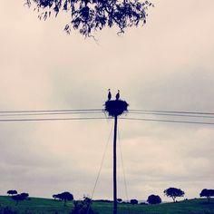 PhotoFriday :: Rural | Somewhere near Mértola, Alentejo :: Portugal (15.02.2015)