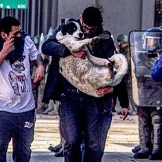 Protestas #chile . #chile #peace #love #dog #trip #dogloversclub #cat #catlovers #doglover #nature #animal #naturelovers #cute #cuteanimals #peru Chile, Peru, Cute Animals, Cats, Nature, Fictional Characters, Scenery, Turkey, Pretty Animals