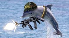 #Military #Dolphins: The Savior Of World's Largest Nuclear Arsenal