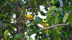 BEAUTIFUL   BIRDS   SHOW