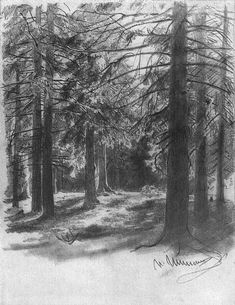 Fir in sunlight (sketch and study) - Ivan Shishkin