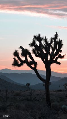 Anyone who doesn't think the desert is beautiful, has never seen our sunsets.