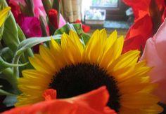 La fleur symbolique de l'été pour moi , c'est le tournesol Quand les enfants étaient petits nous louions une maison et près de la porte il y avait de magnifiques soleils . J'ai plusieurs fois essayé d'en faire pousser mais a chaque fois il leur arrivait...