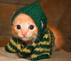#Baylor kitty!