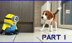http://www.funny-videos.info/dogs/