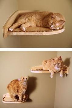 Eco-friendly Cat Furniture Inspired By Nature. Handmade in the USA.