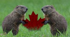 Top Canada Day Jokes: Grab a moose because it's Canada Day, parents! It's that point of the yr to choke down flap-jacks soaked with maple syrup next to. Canada Celebrations, Snow Meme, Running In Snow, Facts About Canada, Celebration Day, Happy Canada Day, Weather Network, O Canada, Newfoundland