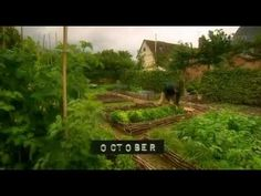 ▶ Fork to Fork ~ Leaves - YouTube