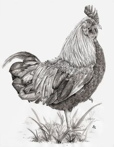 'Rooster' by Angelica Stanton on artflakes.com as poster or art print $17.33
