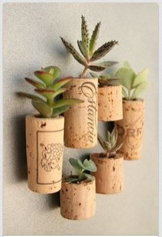 Wine Cork Pot for the leaf of your succulent that fell off original plant.