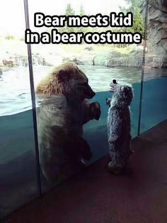 Funny pictures about Bear meets kid in bear costume. Oh, and cool pics about Bear meets kid in bear costume. Also, Bear meets kid in bear costume. Costume Ours, Bear Costume, Animals And Pets, Baby Animals, Funny Animals, Cute Animals, Wild Animals, Animal Funnies, Beautiful Creatures