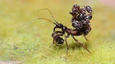 21 araignées dont tout le monde devrait avoir peur.