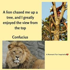 A lion chased me up a tree, and I greatly enjoyed the view from the top - Confucius