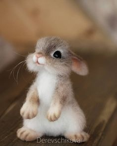 Baby Animals souvenirs from wool. Baby Animals souvenirs from wool. Cute Wild Animals, Baby Animals Super Cute, Cute Baby Bunnies, Cute Baby Dogs, Baby Animals Pictures, Cute Dogs And Puppies, Cute Little Animals, Cute Animal Pictures, Cute Funny Animals