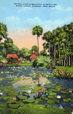 Water lilies - McKee Jungle Gardens, Vero Beach, Florida