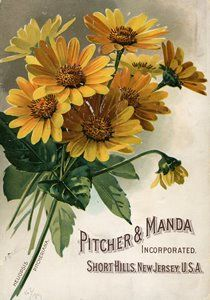 Vintage yellow daisies seed packet