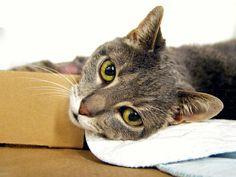 SQUIRREL – A1079415   NYC AC&C Urgent Cats