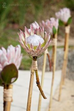 A touch of Africa - great idea to line the aisle with these at an out door wedding or any pathway This Intimate Wedding was a very small ceremony arranged by Wedding Concepts in South Africa Protea Wedding, Bush Wedding, Wedding Flowers, Wedding Ceremony, Wedding Aisle Decorations, Wedding Themes, Wedding Styles, Wedding Ideas, Wedding Cakes