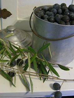 Olives - Olijven