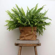 Un coin de verdure chez soi, green home, panier uashmama